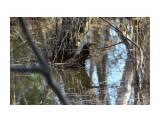 Весенние разливы... Фотограф: vikirin  Просмотров: 1690 Комментариев: 0