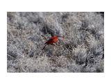 Любимое насекомое Сахалинцев ;( Фотограф: VictorV  Просмотров: 2594 Комментариев: 4