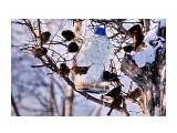 Название: DSC02163 Фотоальбом: ПТИЧЧЧИКИ Категория: Животные Фотограф: vikirin  Время съемки/редактирования: 2019:01:20 20:51:01 Фотокамера: SONY - NEX-5T Диафрагма: f/6.3 Выдержка: 1/400 Фокусное расстояние: 2100/10    Просмотров: 1179 Комментариев: 0