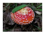 Король леса Фотограф: vikirin  Просмотров: 3945 Комментариев: 0