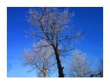 Деревья Фотограф: alexei1903  Просмотров: 1205 Комментариев: 0