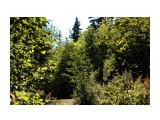 Северный лес..  Фотограф: vikirin  Просмотров: 1903 Комментариев: 1