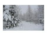 Название: В лесу Фотоальбом: Зима Категория: Пейзаж  Время съемки/редактирования: 2012:11:24 11:29:34 Фотокамера: Panasonic - DMC-TZ3 Диафрагма: f/3.3 Выдержка: 10/8000 Фокусное расстояние: 46/10    Просмотров: 189 Комментариев: 0