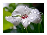 Название: Утро нежности... Фотоальбом: Цветы. Удивительное всегда рядом Категория: Макросъёмка  Просмотров: 196 Комментариев: 0