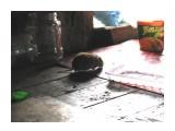 В будке была ручная мышка, кушала сахар и не боялась нас нисколько... Фотограф: vikirin  Просмотров: 4010 Комментариев: 0