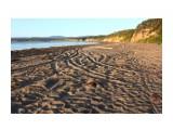 IMG_1595 Фотограф: vikirin Песок, как лист книги.. кого тут только не было..  Просмотров: 699 Комментариев: 0