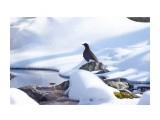 Название: Бурая оляпка Фотоальбом: Птички Категория: Животные Фотограф: VictorV  Время съемки/редактирования: 2020:03:08 12:47:10 Фотокамера: SONY - DSLR-A900 Диафрагма: f/6.3 Выдержка: 1/1250 Фокусное расстояние: 6000/10    Просмотров: 79 Комментариев: 0