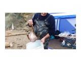 Вот он съел все,что в ловушке было.. как не лопнул только... Фотограф: vikirin  Просмотров: 1622 Комментариев: 0