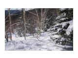 Лыжные тропы  Просмотров: 225 Комментариев: