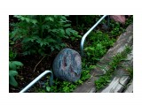 Название: Морские камни в клумбе.... Фотоальбом: 2010 ... 2012 ОГОНЬ КАМНИ и Разное Категория: Разное Фотограф: vikirin  Время съемки/редактирования: 2012:07:09 21:48:02 Фотокамера: Canon - Canon EOS Kiss X3 Диафрагма: f/4.0 Выдержка: 1/60 Фокусное расстояние: 55/1    Просмотров: 2385 Комментариев: 0