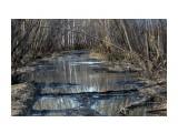 В лесу у речки... Фотограф: vikirin  Просмотров: 1824 Комментариев: 0