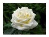 Название: DSC07408_н Фотоальбом: Розы в сквере музея Категория: Цветы  Время съемки/редактирования: 2016:07:29 14:04:25 Фотокамера: SONY - DSC-HX300 Диафрагма: f/5.6 Выдержка: 1/250 Фокусное расстояние: 11268/100    Просмотров: 44 Комментариев: 0