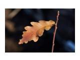 Название: _DSC9595 Фотоальбом: Осень Категория: Макросъёмка Фотограф: VictorV  Время съемки/редактирования: 2018:11:11 20:39:30 Фотокамера: SONY - DSLR-A900 Диафрагма: f/4.0 Выдержка: 1/1250 Фокусное расстояние: 500/10    Просмотров: 274 Комментариев: 0