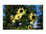 DSC04039 Фотограф: vikirin  Просмотров: 559 Комментариев: 0