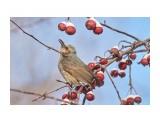 Название: DSC02769 Фотоальбом: Птички Категория: Животные Фотограф: VictorV  Время съемки/редактирования: 2020:01:12 21:58:25 Фотокамера: SONY - SLT-A99 Диафрагма: f/5.0 Выдержка: 1/1000 Фокусное расстояние: 4000/10    Просмотров: 130 Комментариев: 0