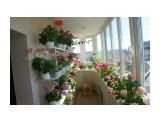 Название: Балконная оранжерея :) Фотоальбом: Цветы Категория: Цветы  Просмотров: 119 Комментариев: 1