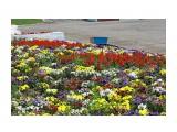 Клумбовое разноцветье.. Фотограф: vikirin  Просмотров: 2098 Комментариев: 0