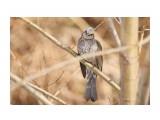 Название: _DSC4445 Фотоальбом: Птички Категория: Животные Фотограф: VictorV  Время съемки/редактирования: 2020:04:02 21:25:11 Фотокамера: SONY - DSLR-A900 Диафрагма: f/6.3 Выдержка: 1/800 Фокусное расстояние: 6000/10    Просмотров: 11 Комментариев: 0
