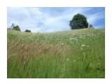 DSC08404 Фотограф: viktorb  Просмотров: 647 Комментариев: 0