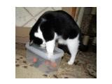 Игрушка для кошек. Мася в процессе вылова игрушек :)  Просмотров: 362 Комментариев: 0