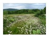 Луга зеленые, луга в цветах и чистый воздух и весь в мечтах!  Фотограф: viktorb Окр. Южно-Сахалинска!  Просмотров: 1737 Комментариев: 0