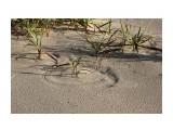 Ветер рисует круги жестким листом пырея.. Фотограф: vikirin  Просмотров: 2747 Комментариев: 0