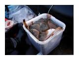 начало рыбалки... Фотограф: В.Дейкин  Просмотров: 1756 Комментариев: 1