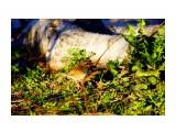 Название: DSC06041_новый размер Фотоальбом: весна 2013 года Категория: Животные Фотограф: В.Дейкин  Время съемки/редактирования: 2013:05:26 21:03:15 Фотокамера: SONY - SLT-A77V Диафрагма: f/6.3 Выдержка: 1/400 Фокусное расстояние: 5000/10    Просмотров: 1838 Комментариев: 0