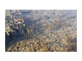 Японский анчоус Большой косяк вдоль берега.  Просмотров: 347 Комментариев: 0