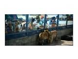 Зоопарк Далянь  Просмотров: 671 Комментариев: 0