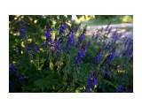 DSC09407 Фотограф: vikirin  Просмотров: 318 Комментариев: 0