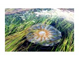 Название: 842017102157 Фотоальбом: Цветы моря Категория: Море  Просмотров: 427 Комментариев: 0