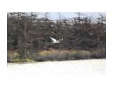 Чайка в поиске.. Фотограф: vikirin  Просмотров: 2462 Комментариев: 0