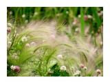 Название: Цветы и травы... Фотоальбом: Цветы Категория: Цветы  Время съемки/редактирования: 2016:07:27 16:21:04 Фотокамера: SONY - DSC-HX300 Диафрагма: f/6.3 Выдержка: 1/250 Фокусное расстояние: 21500/100   Описание: Ячмень гривастый, так называется эта травка.  Просмотров: 75 Комментариев: 1