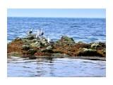 На отливе в мае Фотограф: gadzila  Просмотров: 1461 Комментариев: 0