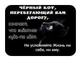 Черный кот  Просмотров: 15 Комментариев:
