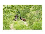Дачный Инспектор :) Фотограф: VictorV  Просмотров: 2796 Комментариев: 4