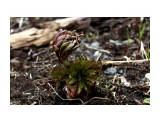 Первые весенние крошечные росточки.. Фотограф: vikirin  Просмотров: 1912 Комментариев: 0