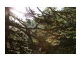 Прогулки по Комиссаровке Фотограф: Фотохроник  Просмотров: 1949 Комментариев: 0