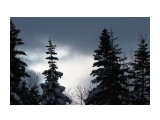 Елки на перевале.. к Новому году... Фотограф: vikirin  Просмотров: 1106 Комментариев: 0