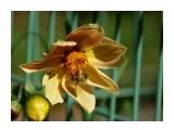 Название: DSC07848_н Фотоальбом: Цветы Категория: Цветы  Время съемки/редактирования: 2016:09:29 15:27:35 Фотокамера: SONY - DSC-HX300 Диафрагма: f/6.3 Выдержка: 1/640 Фокусное расстояние: 21500/100    Просмотров: 31 Комментариев: 1