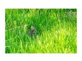 DSC07637-1_новый размер Фотограф: В.Дейкин  Просмотров: 1056 Комментариев: 0