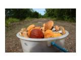 Побродили по лесочку, набрали ведерко грибочков... Фотограф: vikirin  Просмотров: 2940 Комментариев: 0