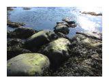Обнажились морские камни.. зеленые... Фотограф: vikirin  Просмотров: 4722 Комментариев: 0