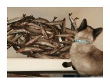 Название: риба))) Фотоальбом: Готовим дома Категория: Животные Описание: Если бы моя кЫса ела рибу она бы лопнула)))  Просмотров: 1172 Комментариев: 1