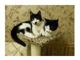 Баська и Маська, как всегда, вместе. Даже на кошачьем комплексе!  Просмотров: 477 Комментариев: 1