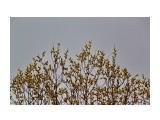 Название: Первое весеннее цветенье... Фотоальбом: МГАЧИ Категория: Природа Фотограф: vikirin  Просмотров: 1133 Комментариев: 0
