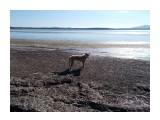 Местный парень Этот пёс нас вёл от протоки Изменчивого до выхода на берег Тунайчи, после чего скромно удалился в неизвестном направлении  Просмотров: 0 Комментариев: