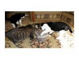 Игрушка для кошек В прозрачном контейнере, в крышке, дырки. Внутри контейнера игрушки. Кошкам забава :)))  Просмотров: 393 Комментариев: 0