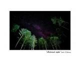 Млечный путь Фотограф: В.Дейкин  Просмотров: 886 Комментариев: 3